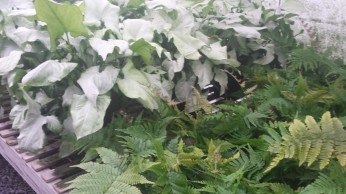 "6"" White Butterfly/Autmun Fern"