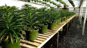 If you need Easter lilies this year, give us a call!