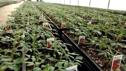 606 Tomato Flats