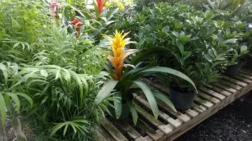 Palm/Bromeliad/Gardenia