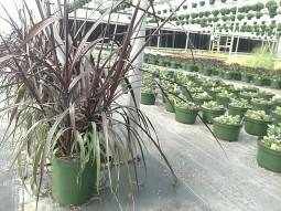 Vertigo Grass