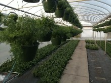Asparagus + Fern Baskets