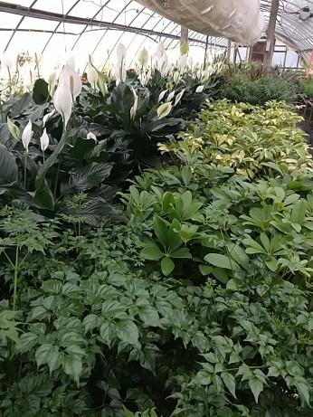 Assorted Foliage